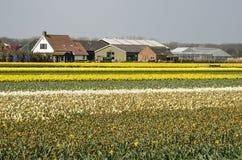 Fermes et gisements de fleur en Hollande photos libres de droits
