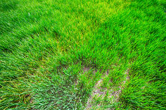 Fermes organiques vertes photographie stock