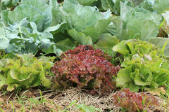 Fermes végétales organiques Photo stock