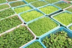 Fermes végétales organiques croissantes Photos stock