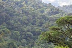 Fermeture éclair-line à travers la nuage-forêt de Costa Rica Photographie stock libre de droits