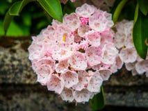 Fermez de l'les belles fleurs de cerisier, pendant le festival en parc d'Ueno, Tokio Images libres de droits