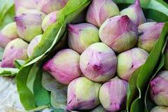 Fermez vers le haut des beaucoup le lotus rose Photographie stock