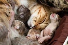 Fermez-vous au visage de la mère que le chat soigne et la repos avec photos libres de droits