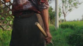 Fermez-vous d'aller rural travailler au gisement de riz banque de vidéos
