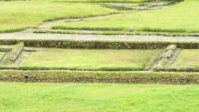 Fermez-vous d'Inca Ruins At Ingapirca Ecuador clips vidéos