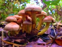 Fermez-vous d'un bloc des champignons image stock