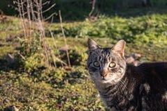 Fermez-vous d'un chat intéressé dans le jardin photos libres de droits