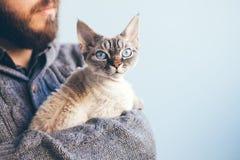 Fermez-vous d'un chat observé assez bleu se reposant sur la barbe équipe des mains image stock