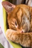 Fermez-vous d'un chat rouge décontracté Image stock