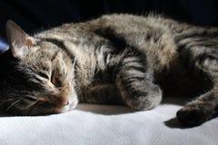 Fermez-vous d'un chat tigré photo libre de droits