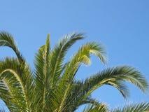 Fermez-vous d'un dessus tropical vibrant vert clair de palmier avec des frondes contre un ciel ensoleillé d'été bleu lumineux images stock