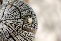 Fermez-vous d'un escargot sur un tronc coupé photo stock