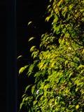 Fermez-vous d'un feuillage jaune dans l'automn photographie stock libre de droits