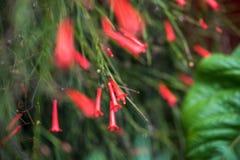 fermez-vous d'un groupe rouge de fleur avec le foyer sélectif photographie stock libre de droits