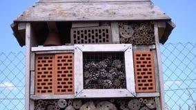 Fermez-vous d'un hôtel d'insecte pour les insectes utiles au verger, 4k clips vidéos
