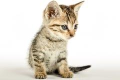 Fermez-vous d'un kittie Image stock
