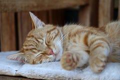 Fermez-vous d'un minou de sommeil Image libre de droits