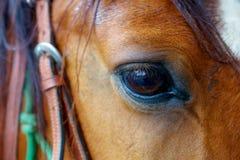Fermez-vous d'un oeil brun de cheval Photos stock