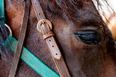 Fermez-vous d'un oeil brun de cheval Images stock