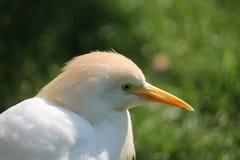 Fermez-vous d'un oiseau Image stock