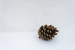 Fermez-vous d'un pinecone simple sur un fond blanc Photo stock