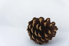 Fermez-vous d'un pinecone sur un fond blanc Image stock