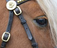 Fermez-vous d'un poney de châtaigne juste autour du secteur d'oeil photographie stock