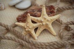 Fermez-vous d'un Sarfish sur Marine Background rustique avec l'espace de copie Concept d'été et de vacances photo stock