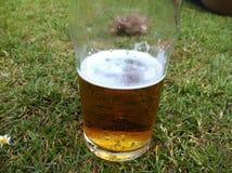 fermez-vous d'un verre de bière dans l'herbe Photos libres de droits