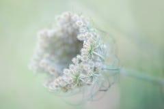 Fermez-vous d'un wildflower Photos stock