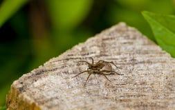 Fermez-vous d'une araignée Image stock