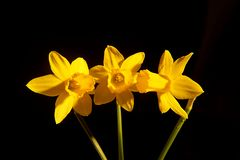 Fermez-vous d'une belle fleur photographie stock