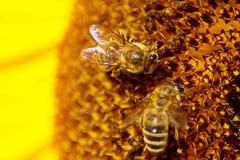 Fermez-vous d'une belles fleur et abeille images stock