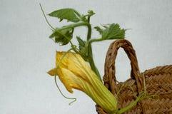 Fermez-vous d'une fleur de courgette dans un panier en osier image stock