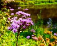 Fermez-vous d'une fleur rose à côté d'un étang Images stock