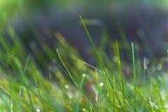 Fermez-vous d'une rosée de matin sur l'herbe verte image stock