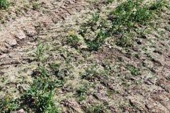 Fermez-vous d'une surface d'au sol d'agriculture avec les détails élevés photos stock