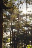 Fermez-vous d'une toile d'araignée avec des baisses de l'eau, rosée images libres de droits