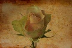 Fermez-vous de beau sensible s'est levé comme symbole d'amour dans le style de vintage Images libres de droits