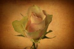 Fermez-vous de beau sensible s'est levé comme symbole d'amour dans le style de vintage Images stock
