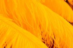 Fermez-vous de beaucoup de plumes oranges molles Photographie stock