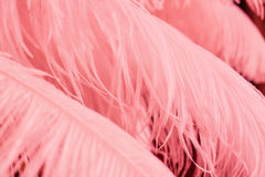 Fermez-vous de beaucoup de plumes roses molles Photographie stock