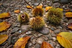 Fermez-vous de composition d'automne image stock