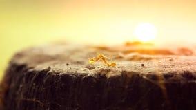 Fermez-vous de deux fourmis faisant l'amour Photos libres de droits