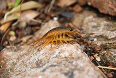 Fermez-vous de deux insectes Image stock