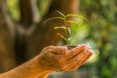 Fermez-vous de deux mains se tenant et s'inquiétant une jeune plante verte, plantant l'arbre, élevant un arbre, la nature d'amour Image libre de droits