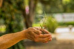 Fermez-vous de deux mains se tenant et s'inquiétant une jeune plante verte, plantant l'arbre, élevant un arbre, la nature d'amour Photographie stock libre de droits