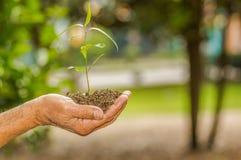 Fermez-vous de deux mains se tenant et s'inquiétant une jeune plante verte, plantant l'arbre, élevant un arbre, la nature d'amour Images stock