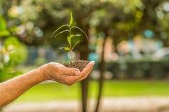 Fermez-vous de deux mains se tenant et s'inquiétant une jeune plante verte, plantant l'arbre, élevant un arbre, la nature d'amour Image stock